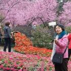 春花作伴好拍照