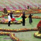 新都锦门的菊花节