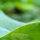 夏日绿道虫虫世界