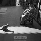 和猫咪交流--应天寺