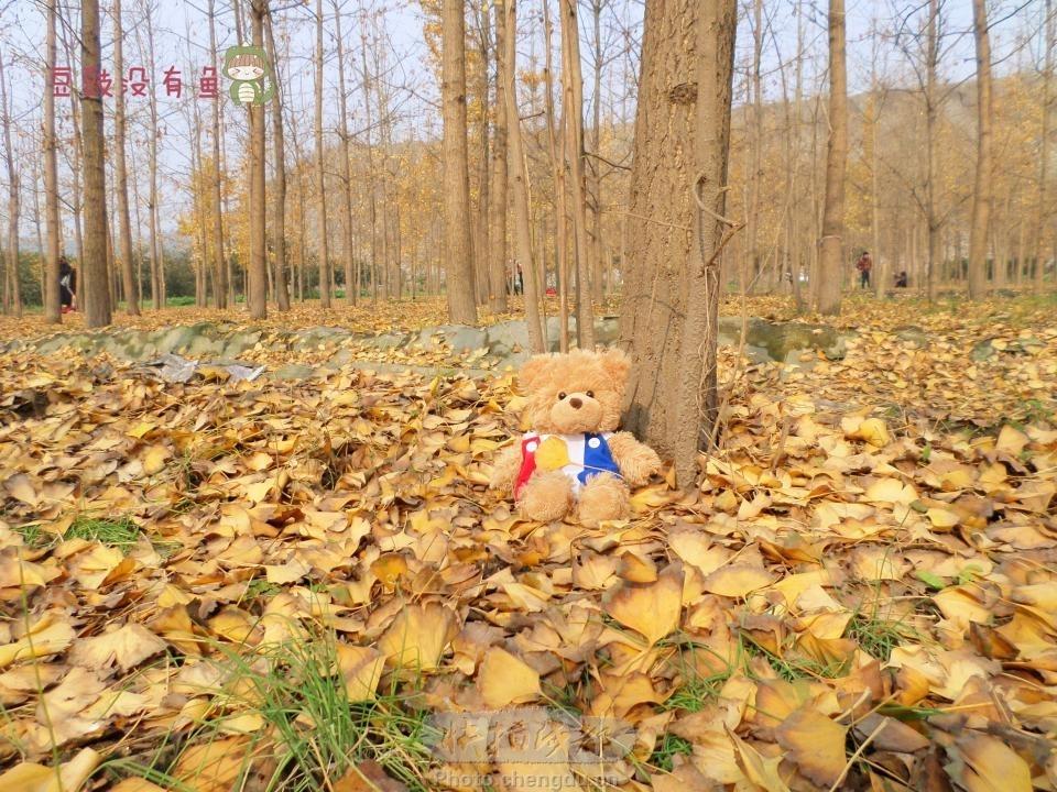 银杏是冬季的赞美诗(2) by 拍客豆豉没有鱼 快拍