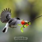 觅食的小鸟