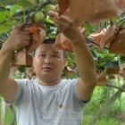 眉山洪雅县:乡村振兴中的多样化高效水果种植实践者——朱义军