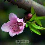 挑花朵朵花