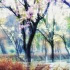 春风中绽放