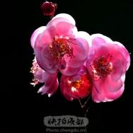 梅花迎春(5...