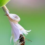 蜗牛与蜂蜜
