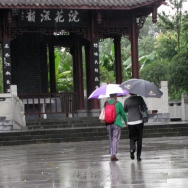 雨游万树山