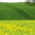 春天的田野