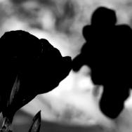 黑白动漫影子...