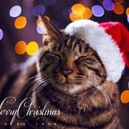 圣诞快乐~