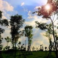 阳光。云。树...